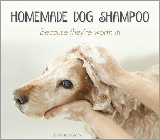 DIY Dog Shampoo Recipes 11