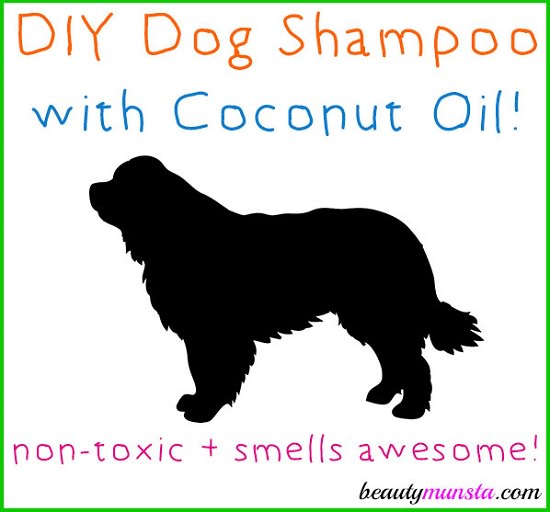 DIY Dog Shampoo Recipes 9