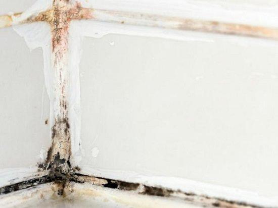 homemade mold remover 15