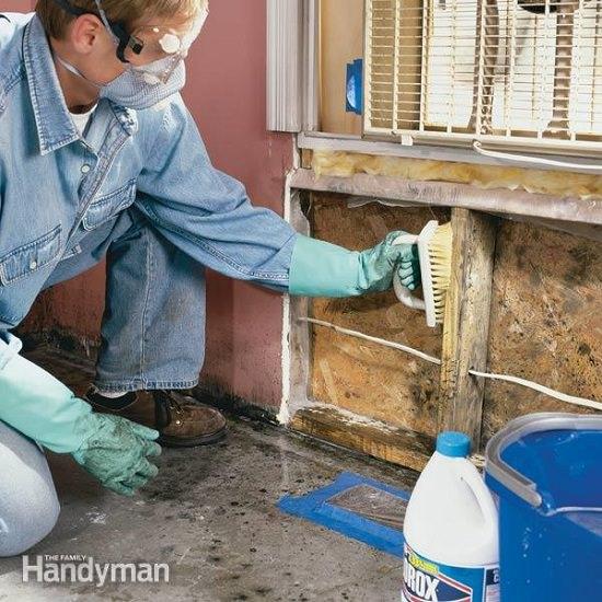 homemade mold remover 3