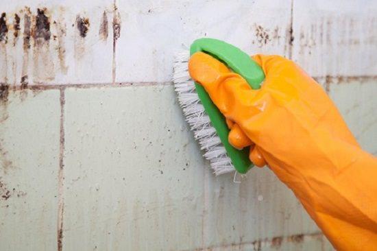 homemade mold remover 5