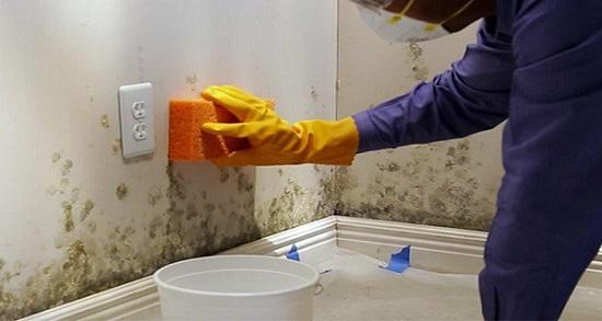 homemade mold remover 11