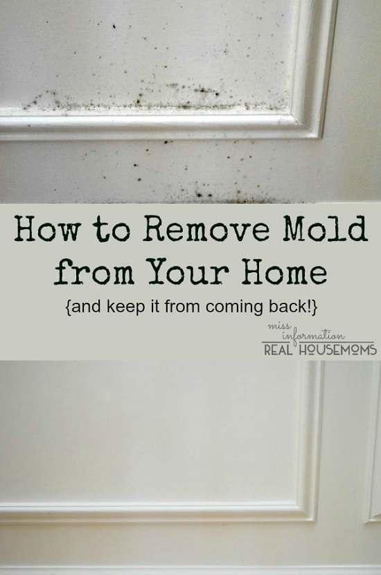 homemade mold remover 13