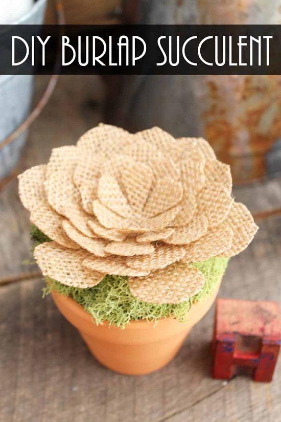 Craft Succulent Decor