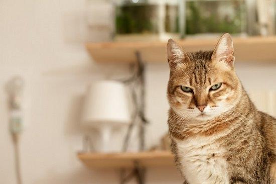 Castor Oil for Cats1